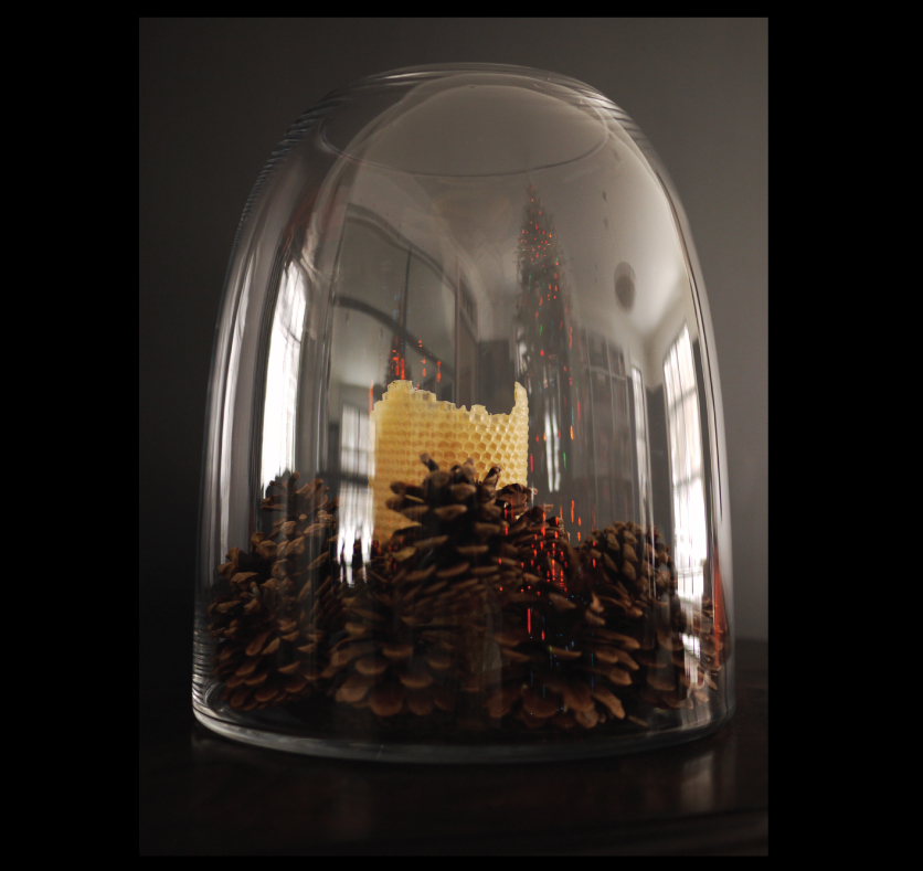 pinecones-in-glass-hurricanes